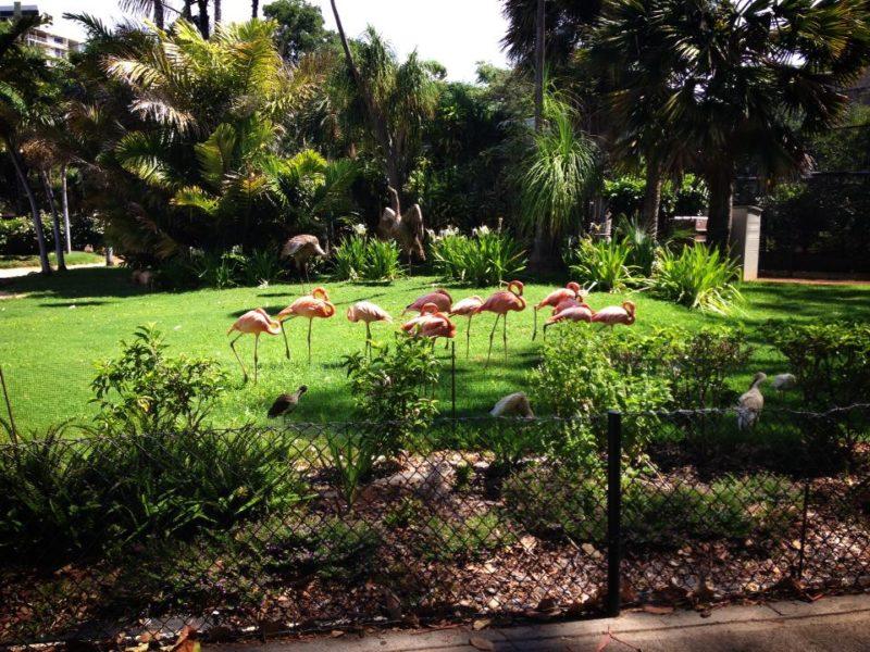 ホノルル動物園のフラミンゴ