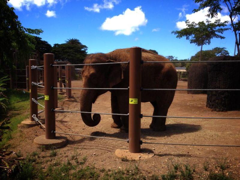 ホノルル動物園のゾウ